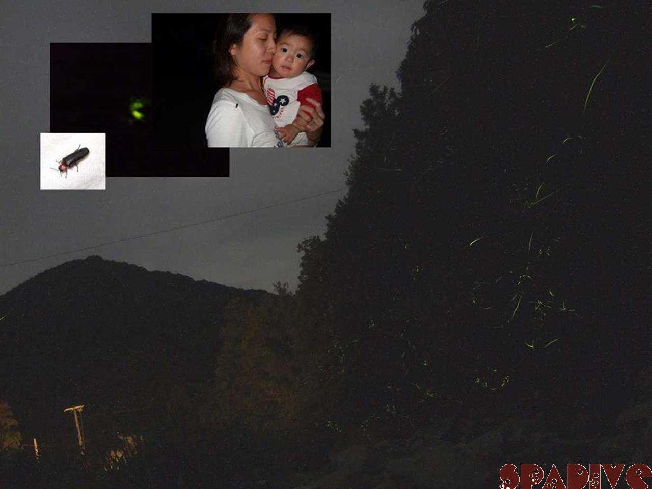 ホタル蛍ほたる 太間川上流|6/4/2009