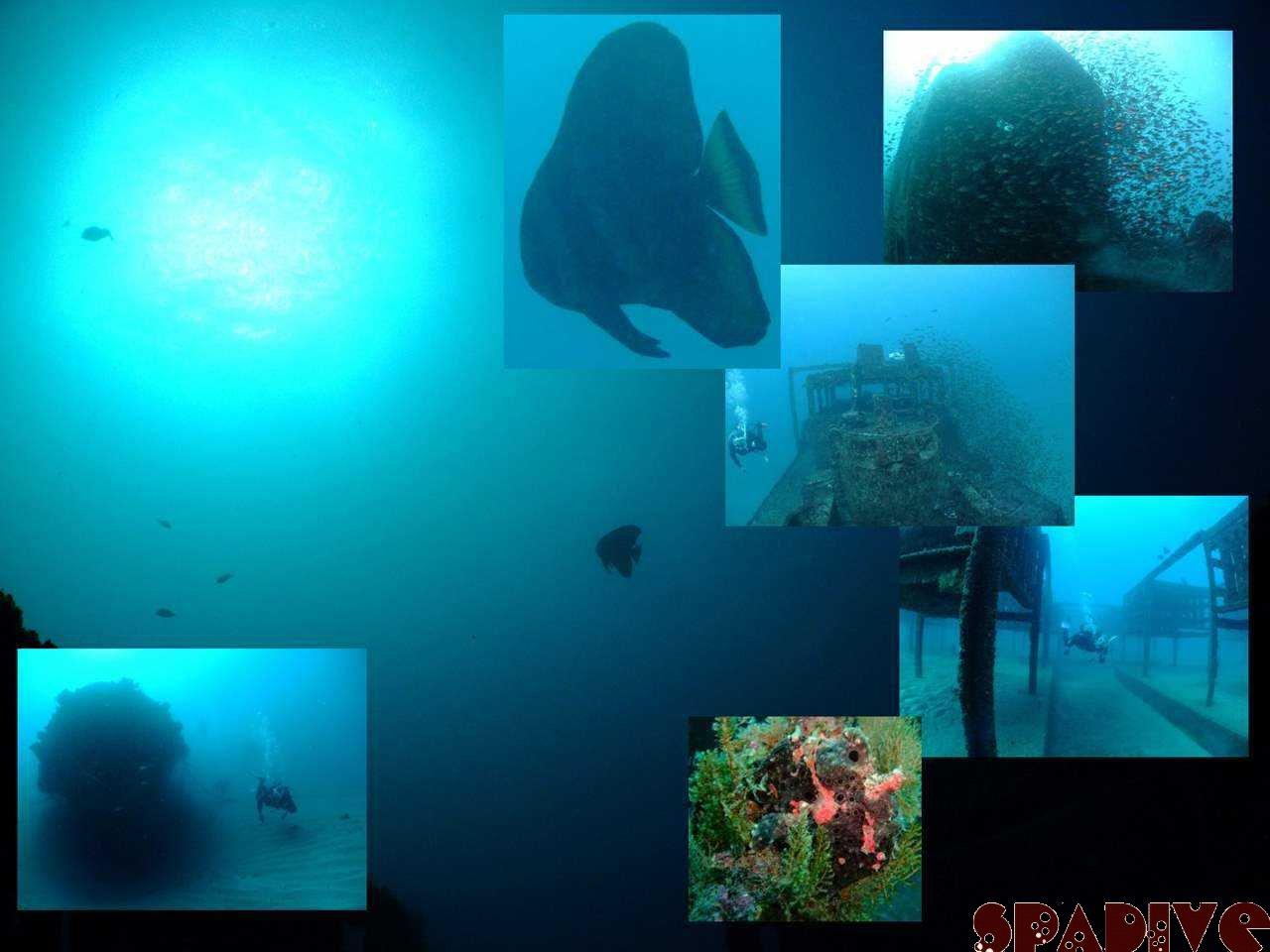 沈船&南の根ボートファンダイビング|1/11/2009南紀白浜