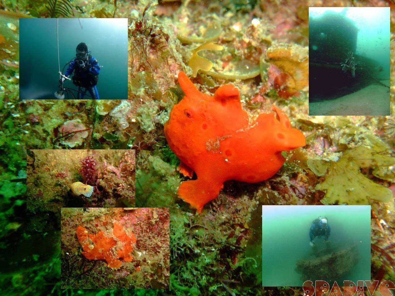 エビセ&沈船ボートファンダイブ|ディープSP|4/11/2009南紀白浜