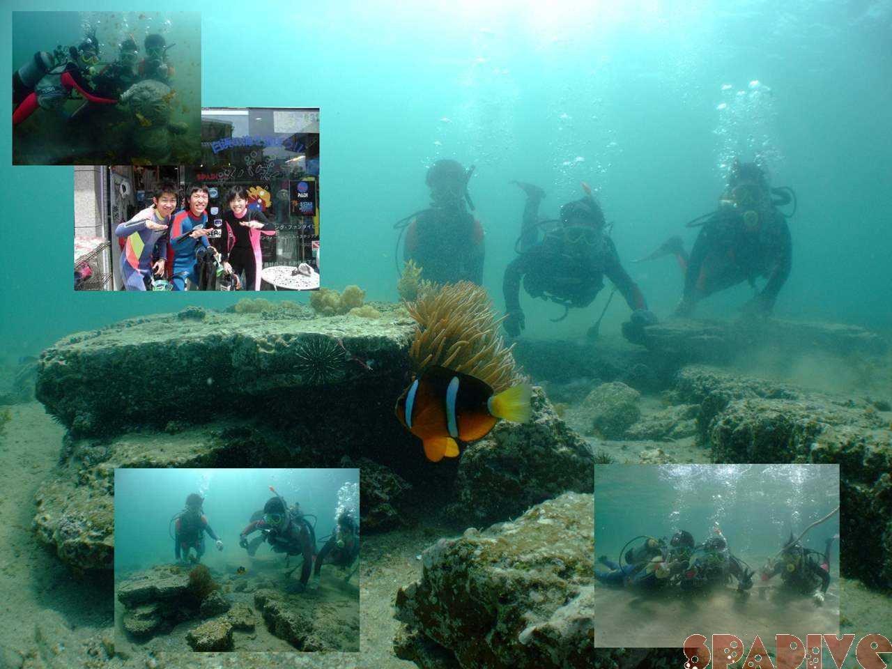 体験ダイビング|5/2/2009南紀白浜権現崎