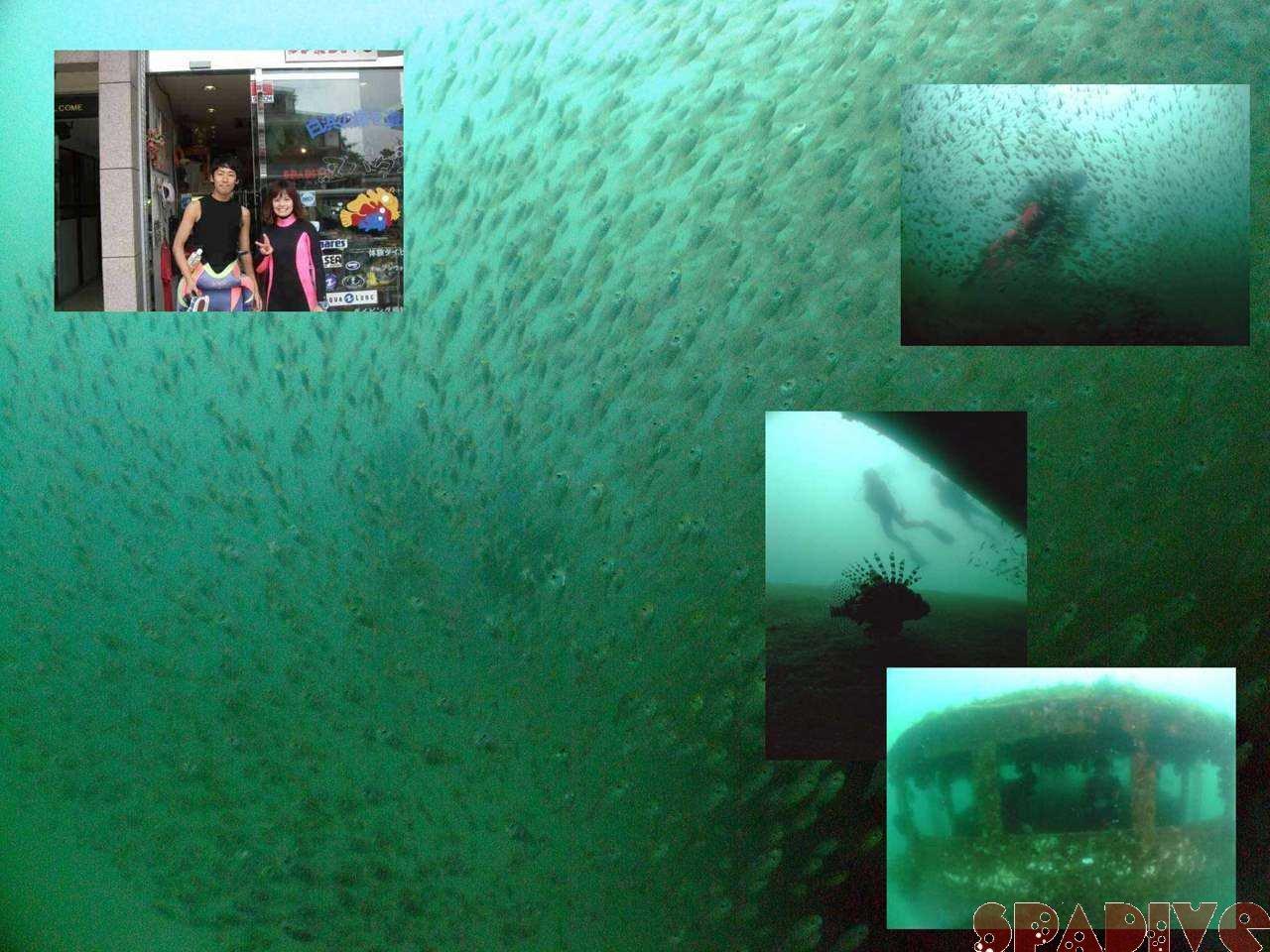 北の根&沈船ボートファンダイビング|5/27/2009南紀白浜