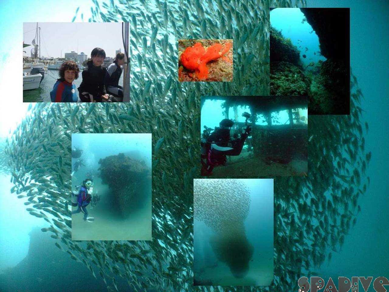 M&沈船ボートファンダイブ 6/7/2009南紀白浜海情報