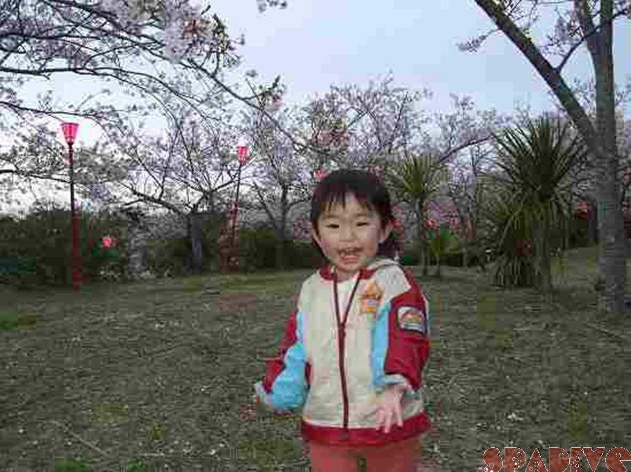 まだまだキレイな桜満開です|4/6/2010白浜平草原公園