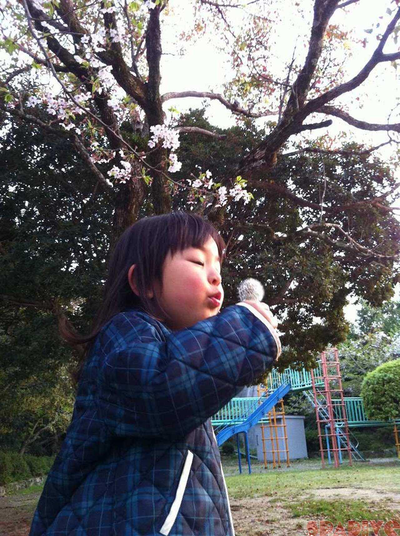 毎年恒例♪夜桜花見♪ 2012/4/12
