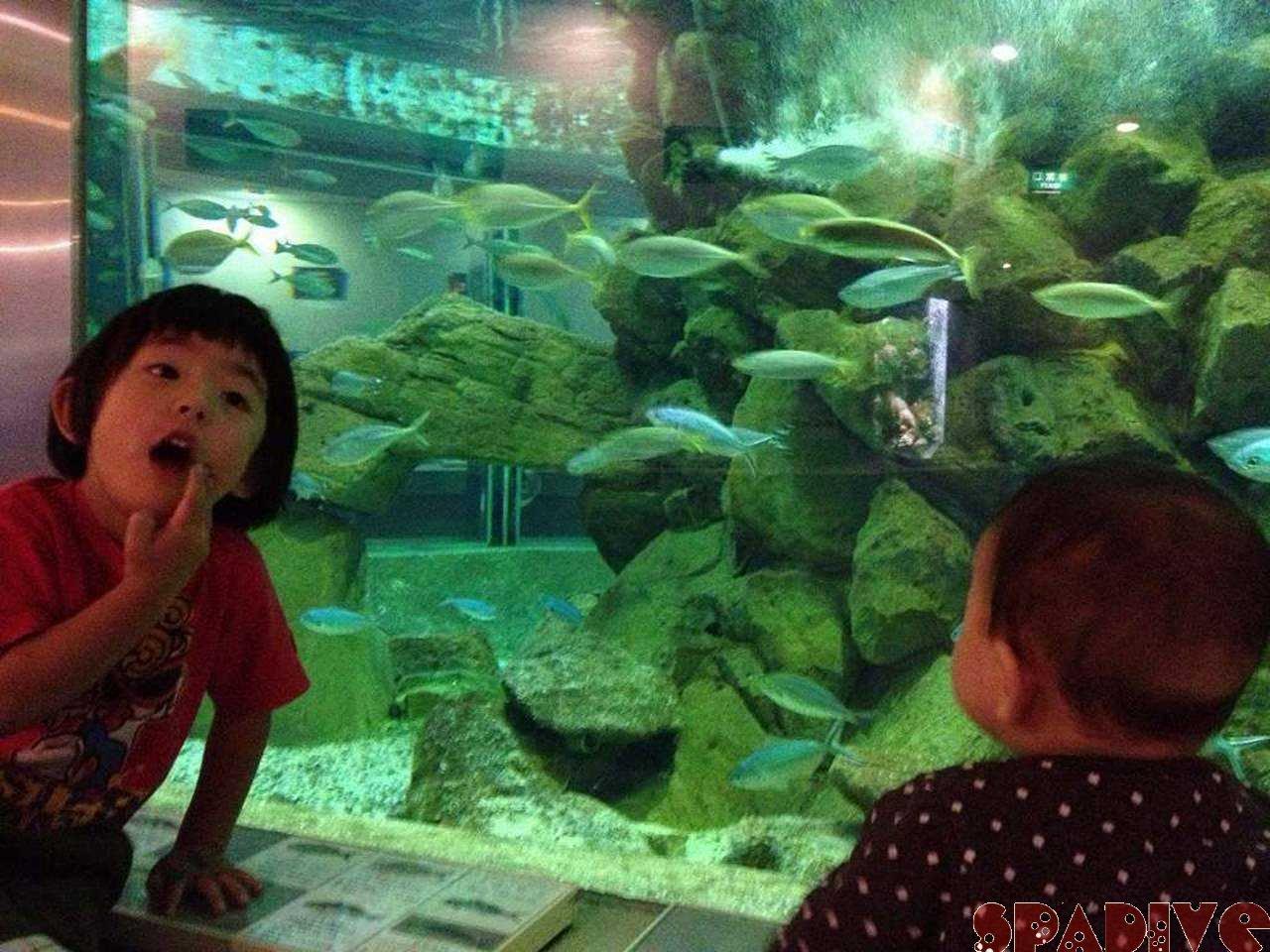 子ども達といった白浜の京都大学水族館 10/27/2012南紀白浜