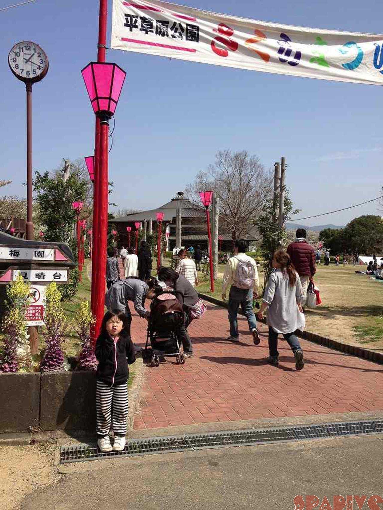 平草原公園『桜まつり』へ|4/1/2013